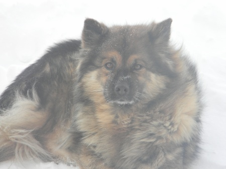 Mandy loved the snow. Just look at her, all Chewbacca-like.